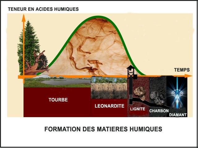 Formation de l`acide fulvique et de l`acide humique - Léonardite